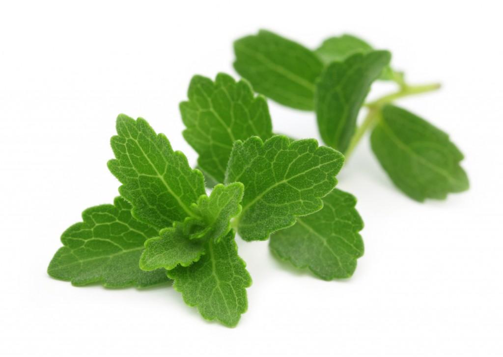 Branche de Stevia Rebaudiana